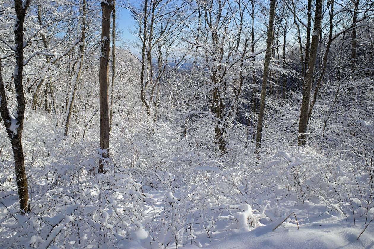 陣馬山~高尾山の霧氷・樹氷