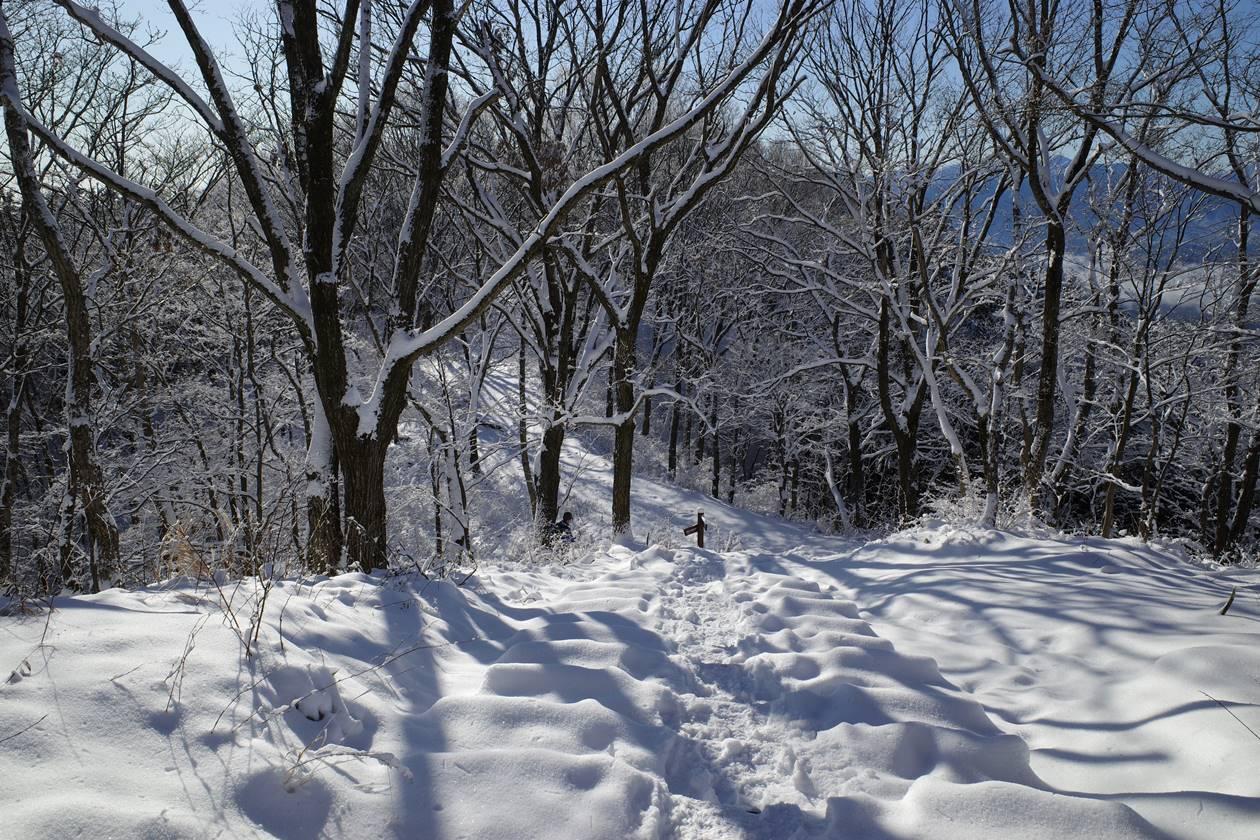 陣馬山~高尾山 裏高尾縦走雪山登山