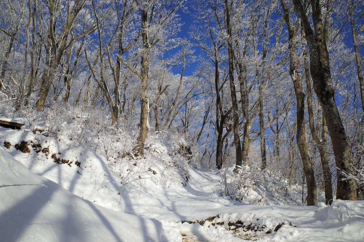 陣馬山の霧氷 日帰り雪山登山