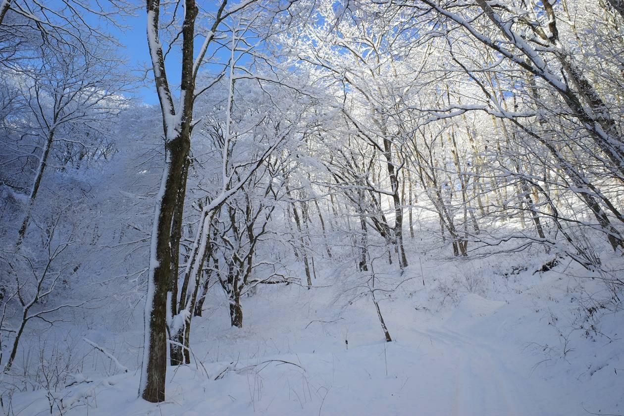 陣馬山の霧氷風景