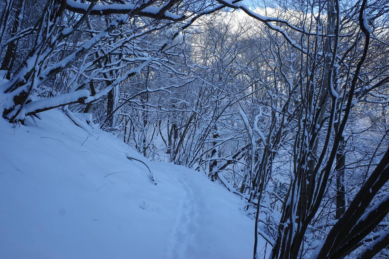 陣馬山 雪山登山