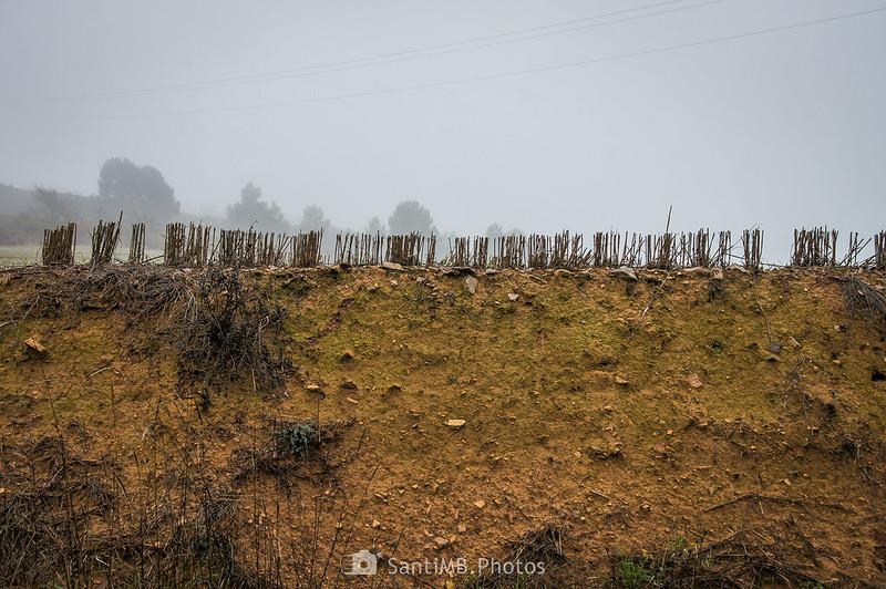 Campo de cereal junto al camino a Mas de Bondia