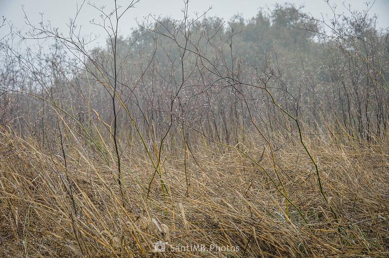 Niebla condensada en matas de hinojo cerca de la Cabana del Mullarac