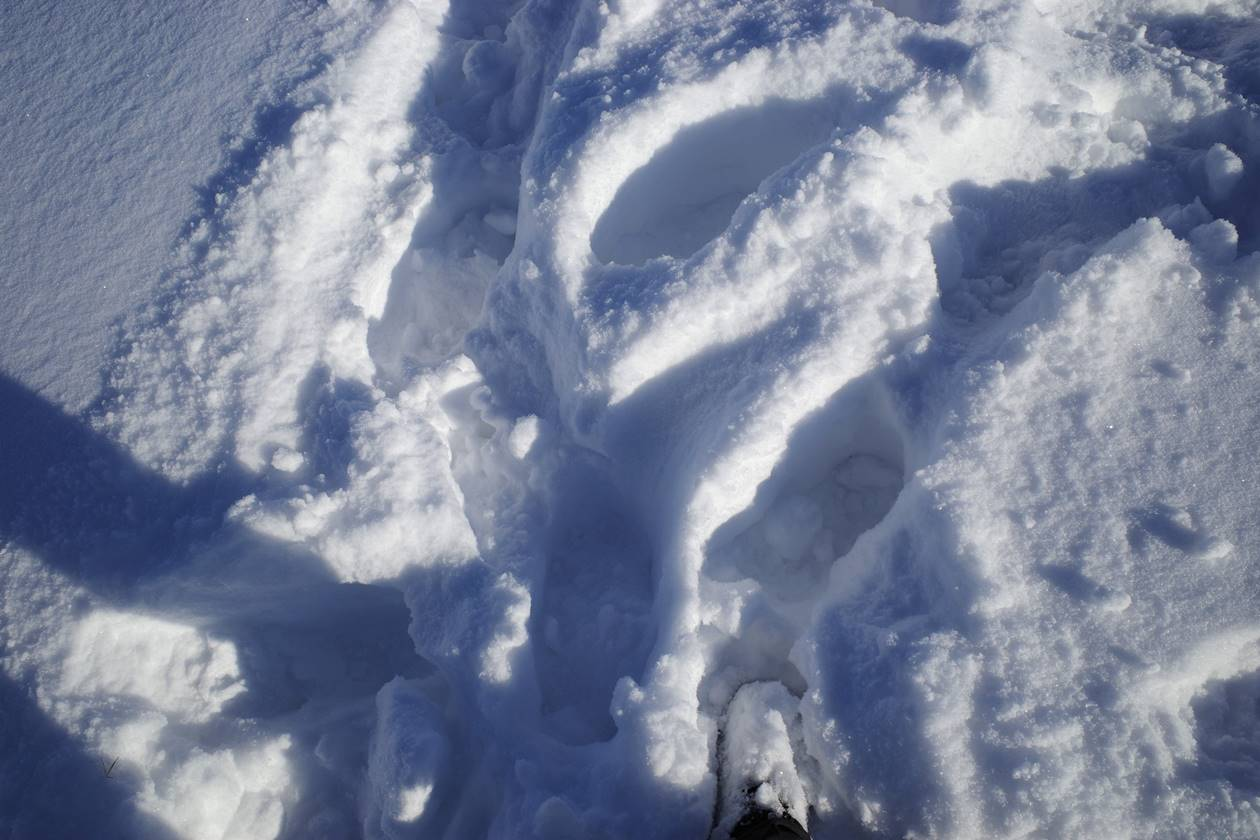 陣馬山でラッセル登山
