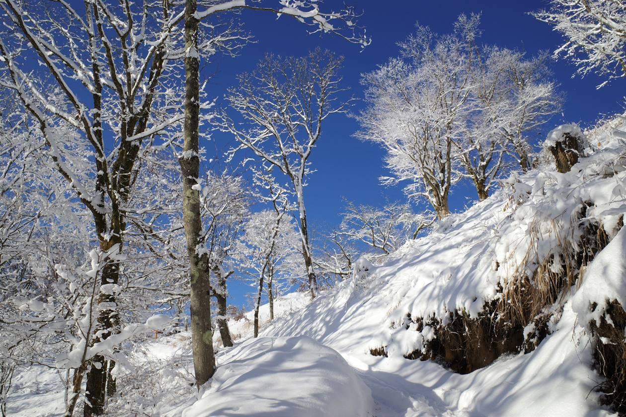 冬の陣馬山~高尾山 裏高尾縦走 雪山登山