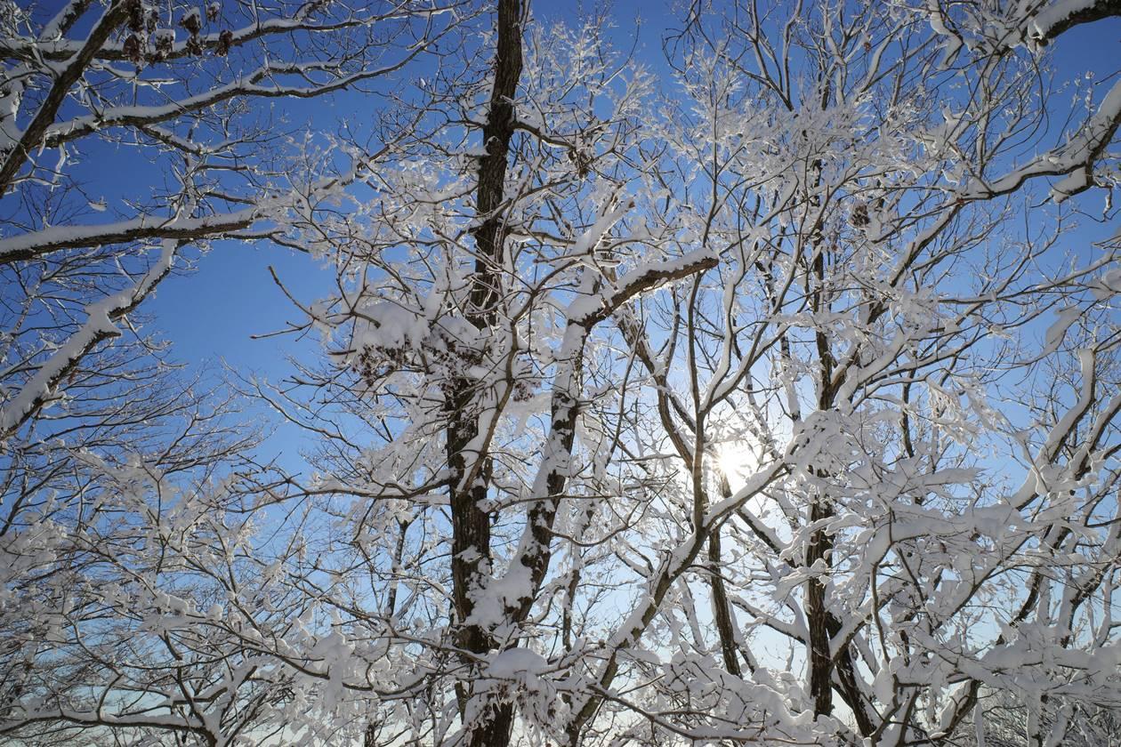 陣馬山の樹氷
