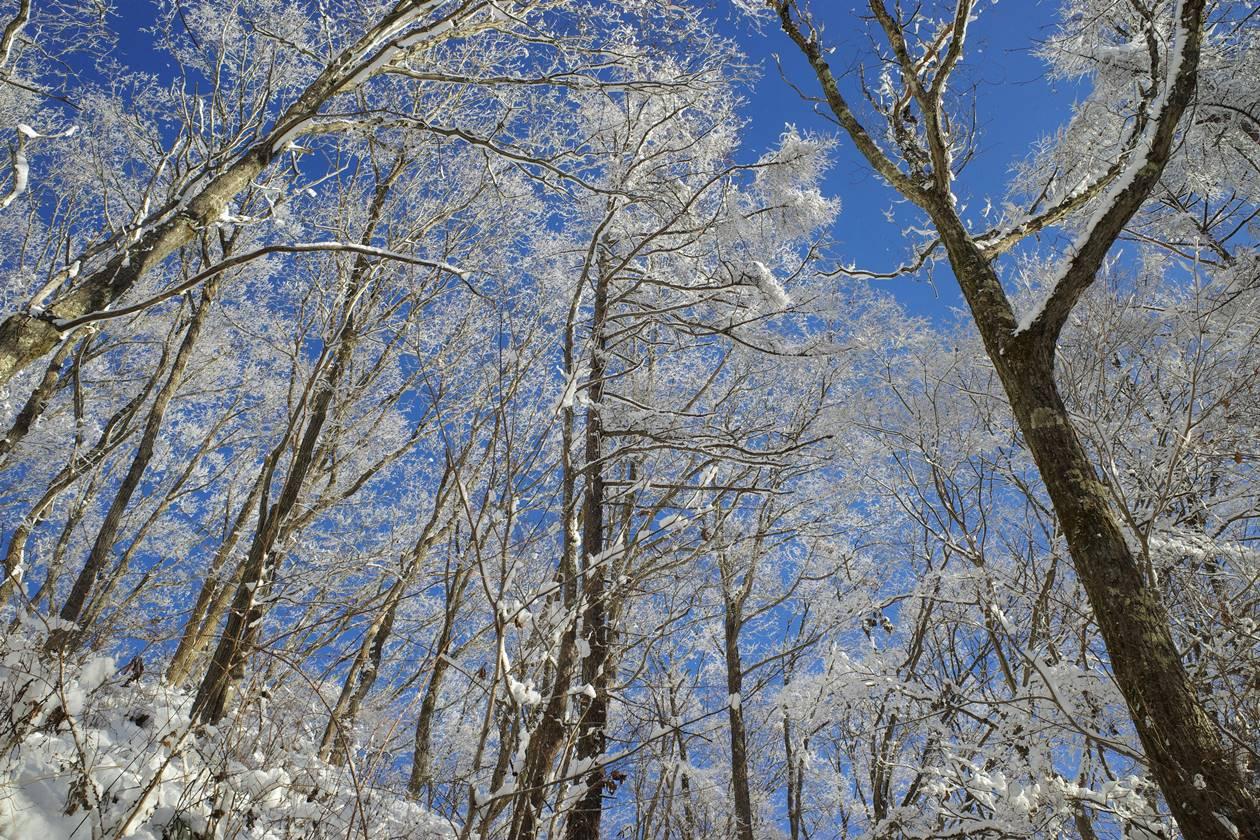 陣馬山の美しい霧氷風景 日帰り登山