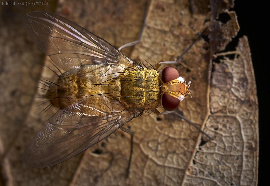 Fly (Leskiini)