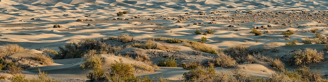 Morning Pano at Mequite Flat Dunes