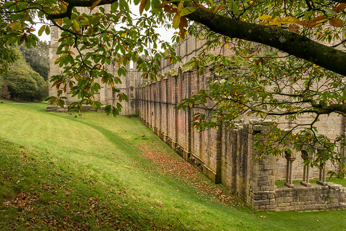 fountainsabbey abbey abbeychurch harrogate cistercian monastery ruins remains listed gradei building architecture tower magnesianlimestone tree foliage bough spreading sweetchestnut grass bank landscape yorkshire england nationaltrust englishheritage