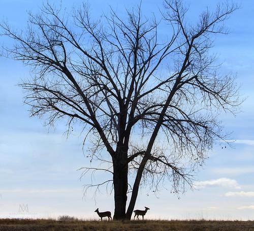deer tree landscape animal marianna armata fauna sky denver