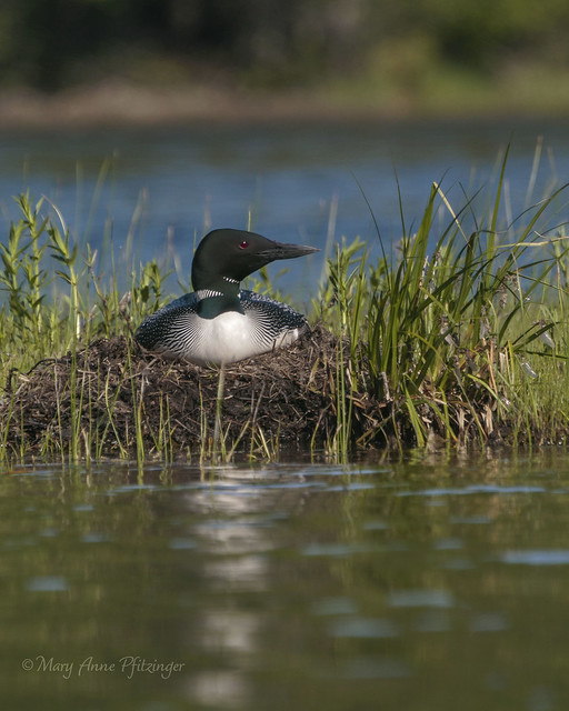 Nested Near the Waterline