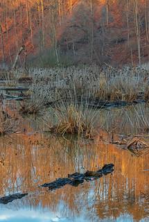 lagoon wetlands