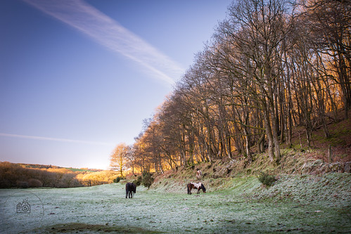 dartmoor pony ponies horse frost cold winter sunrise national park