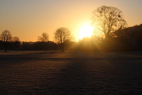 sunrise sky tree dawn