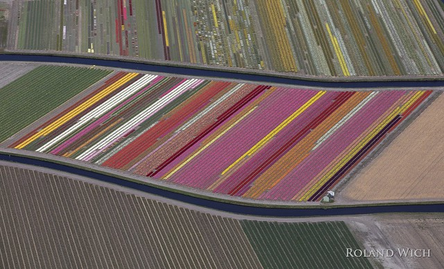 Holland - Flower Fields