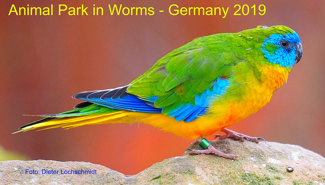Bird - Animal Park in Worms, Germany - 2019