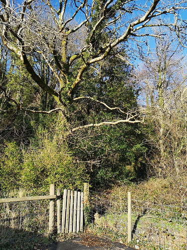 Sunlit tree & gate