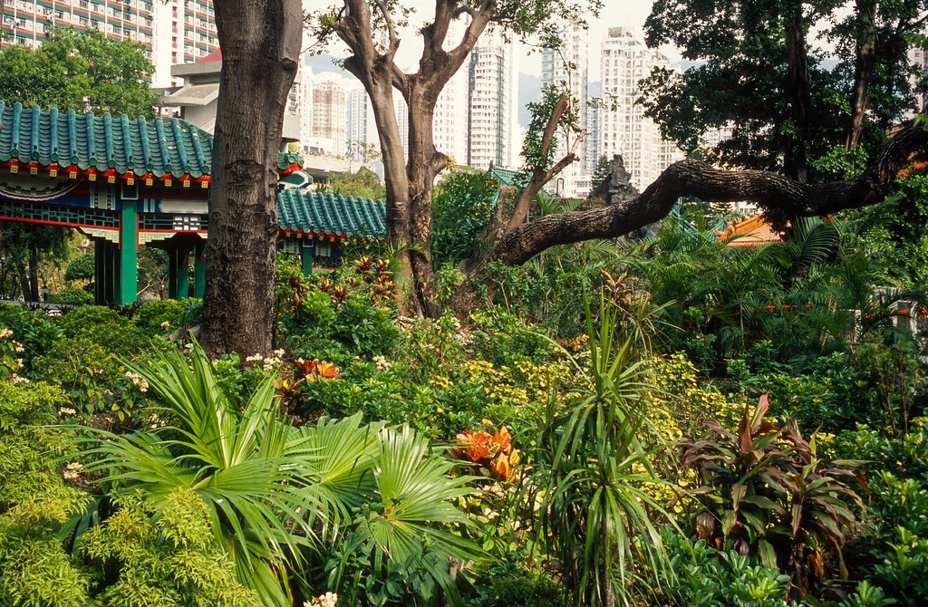 View from one of the 'oases' in the big city, HK