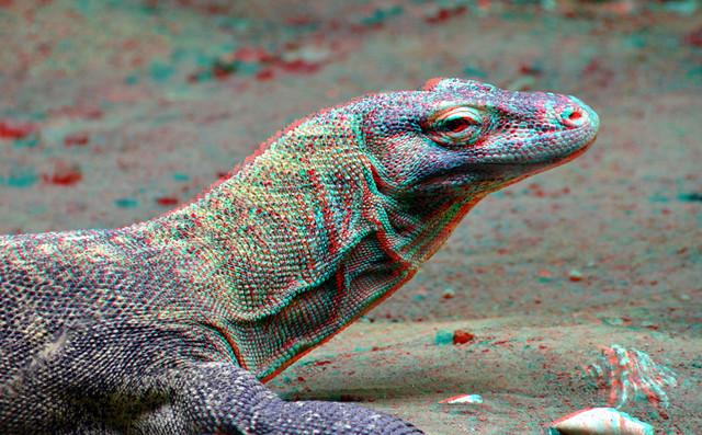 Komodo Zoo Rotterdam 3D anaglyph