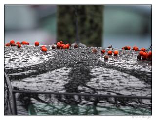 Unterm Beerenbaum...