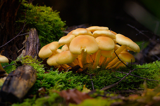 A mushroom family in the moss
