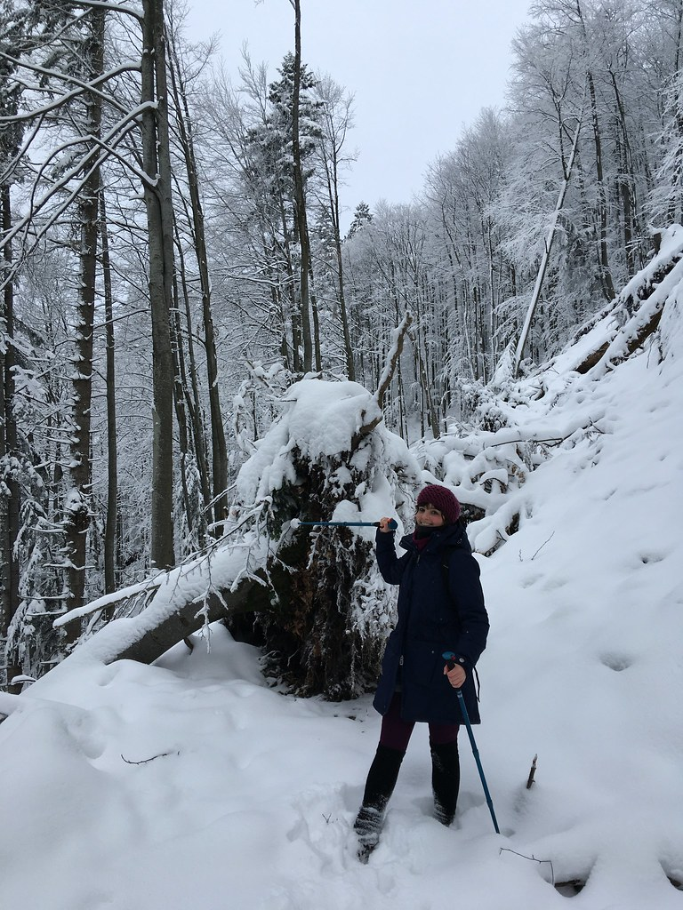 Faházikó az erdő szélén – Volovets