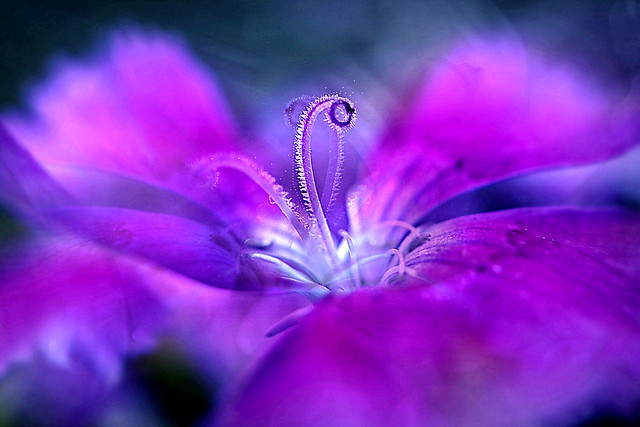 Delicate beauty. A Slider :-)