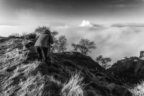helsbyhill fog above blackwhite monography trees silhouette cheshire helsby hill hss