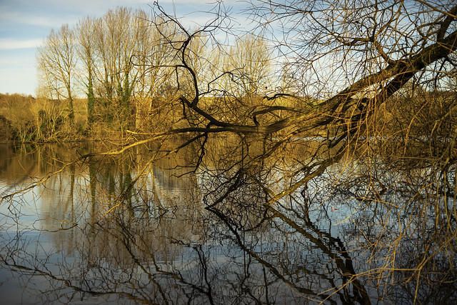 reflecting branches and trees