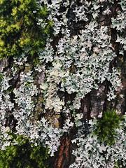 Moss 'n' Lichen
