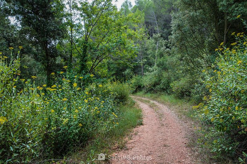 Camino de Can Bosc de Baix
