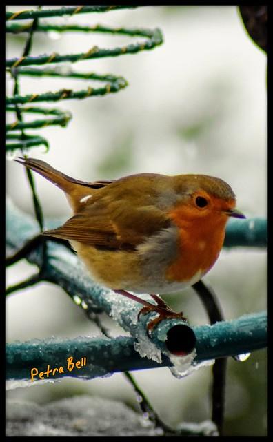Robin 💖