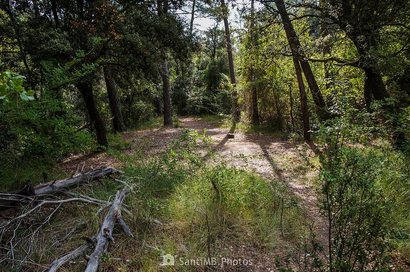 Bosque de camino a los Pèlags de Foix