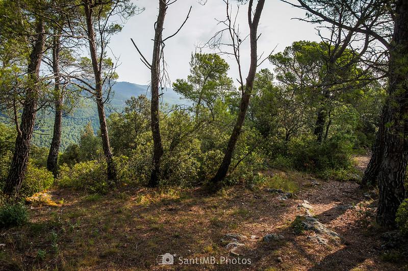Cerca del Santuari de Foix