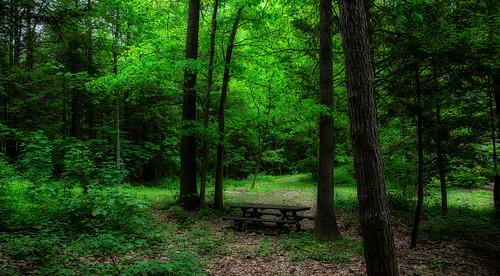 mood green lush bench forest dreamy orton trees wilderness woods mystical magical canoneos5dmarkiii milliecruz ef24105mmf4lisusm landscape topazstudio2 texture sliderssunday hss schuylkill pennsylvania sweetarrowlakecounty park woodland tranquility spring