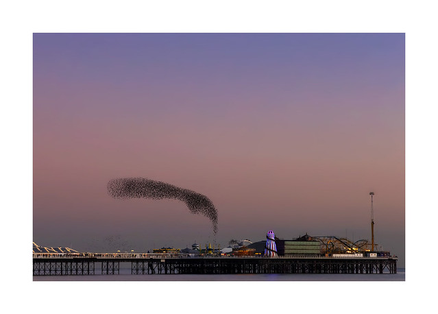 A murmation of starlings at Brighton Pier ...