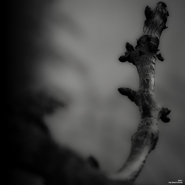 Les arbres bourgeonnent