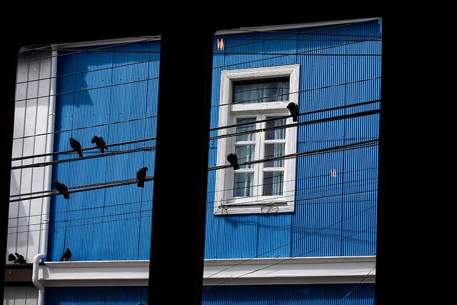 Chili - Comme un oiseau sur un fil...à Valparaiso