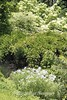 Dawes Arboretum (50)