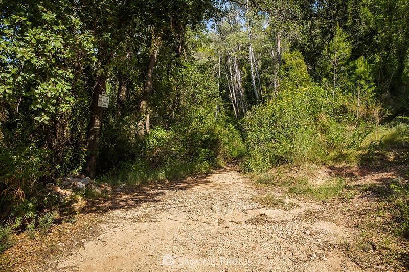 Camino al Molí de la Pineda
