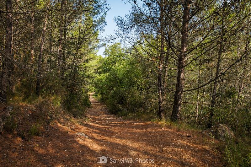 Bajando del Santuari de Foix a les Valls de Foix