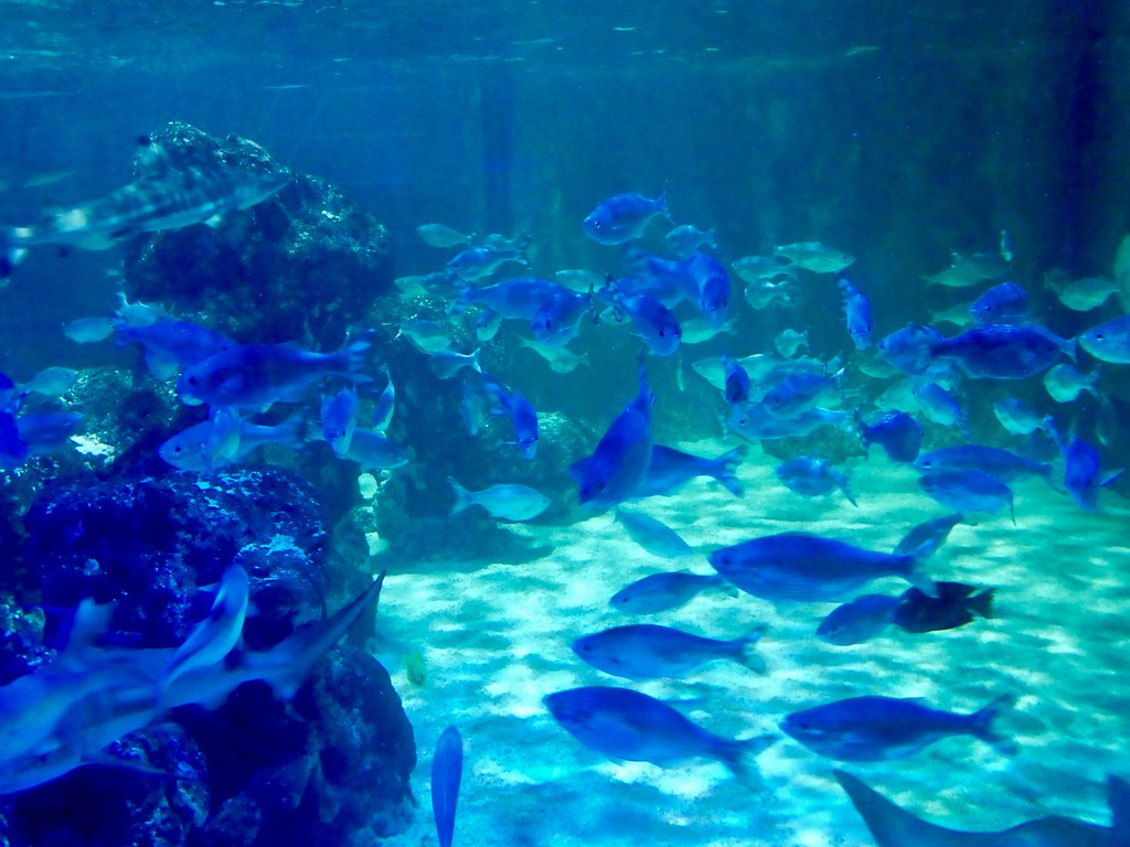 Marine life in the Blackpool SeaLife Centre