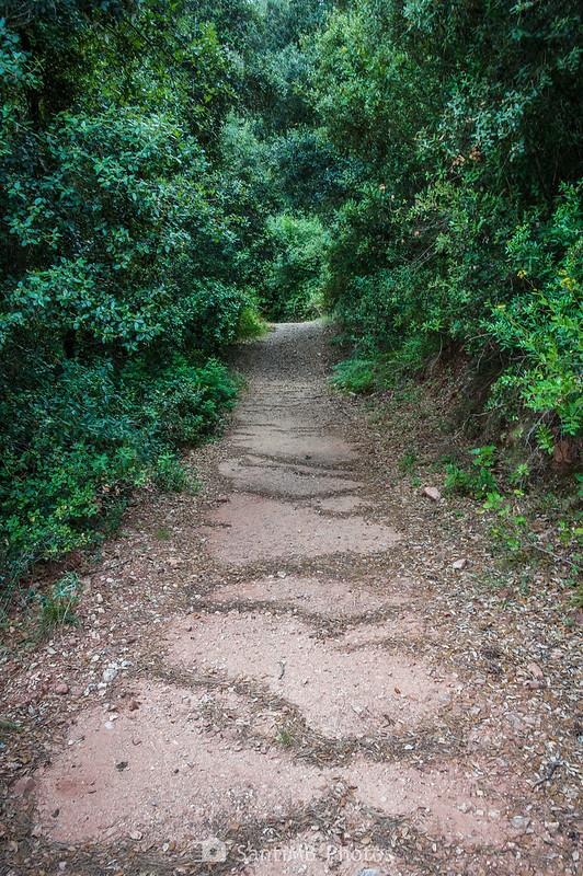 Camí de Can Bosc de Baix