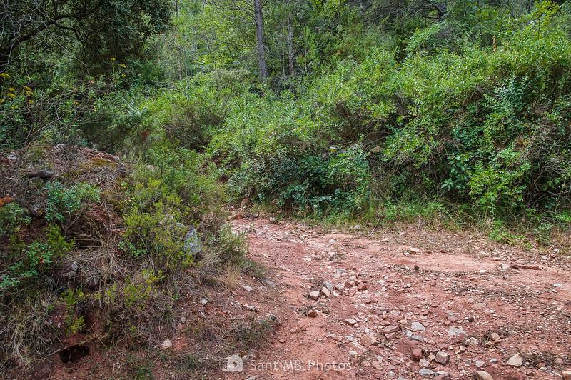Cruce de camino a Can Bosc de Baix