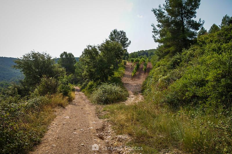 Viñedos en los campos de les Valls de Foix