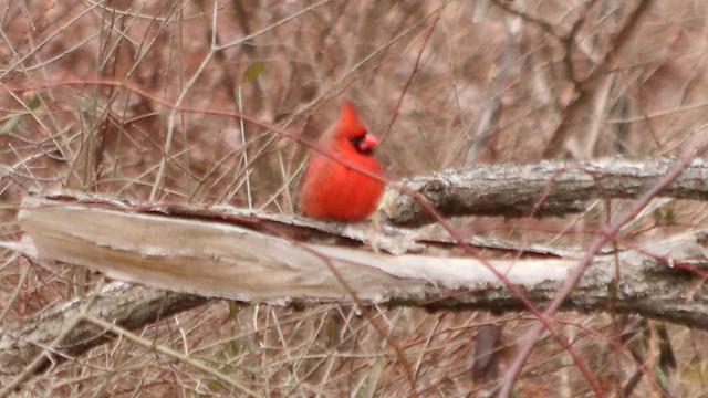 Fuzzy Cardinal