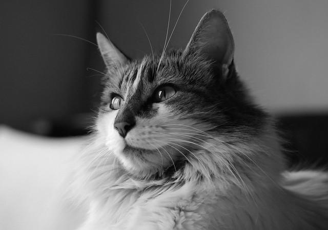 Katty 19012020
