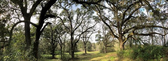 49411590611 3b780f2fcd z Greenway oaks and grass