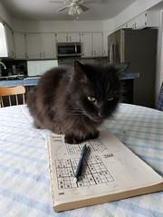 cats cosmo pets relaxing saline michigan puzzles sudoku cosmo2020 cosmojan19th2020